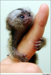 finger-monkey_010