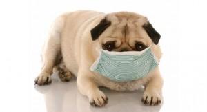 花粉症は免疫力を上げれば改善されます!