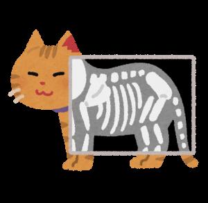 pet_xray_cat